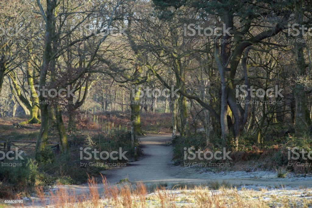 The Devil's Punchbowl in Surrey, UK stock photo