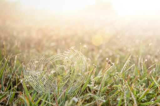 The dew in the morning with spider web at the Meadow.It's refreshing,copy space