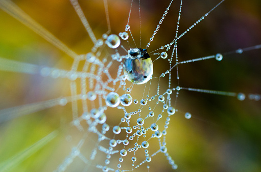 The dew on the web. Web in the background of bright grass.