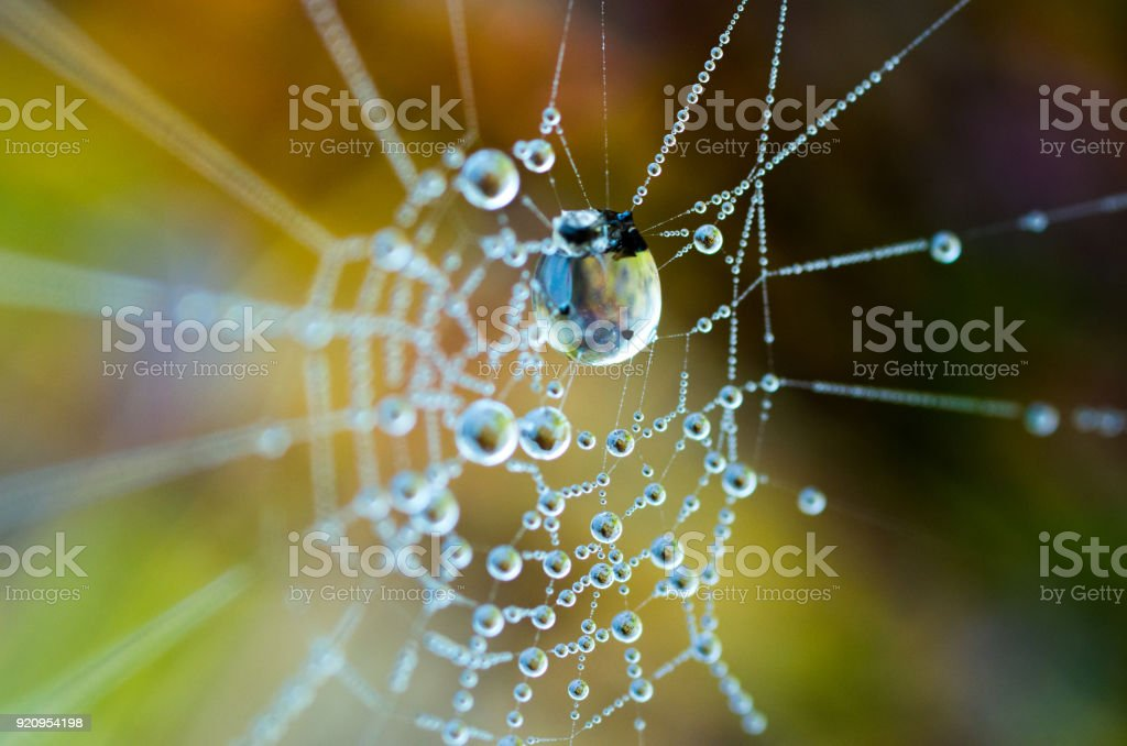 The dew on the web. Web in the background of bright grass. stock photo