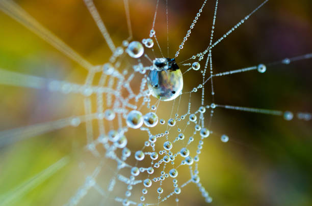 the dew on the web. web in the background of bright grass. - spider web stock photos and pictures