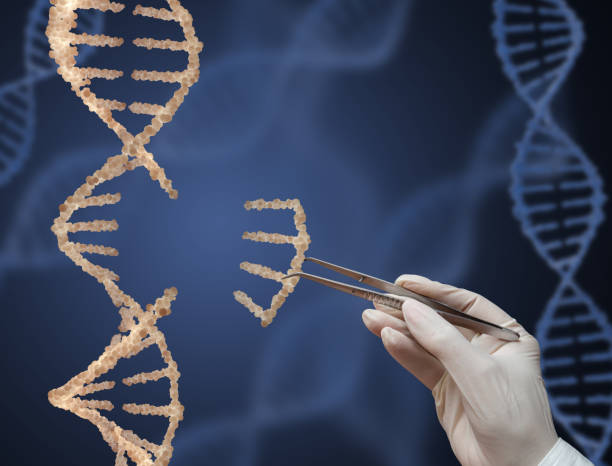 The DNA molecule DNA molecule and a hand with tweezers. 3d render. nucleotide stock pictures, royalty-free photos & images