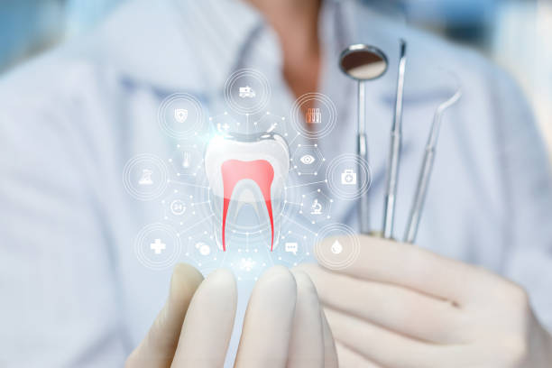 The doctor shows the model of a healthy tooth . stock photo