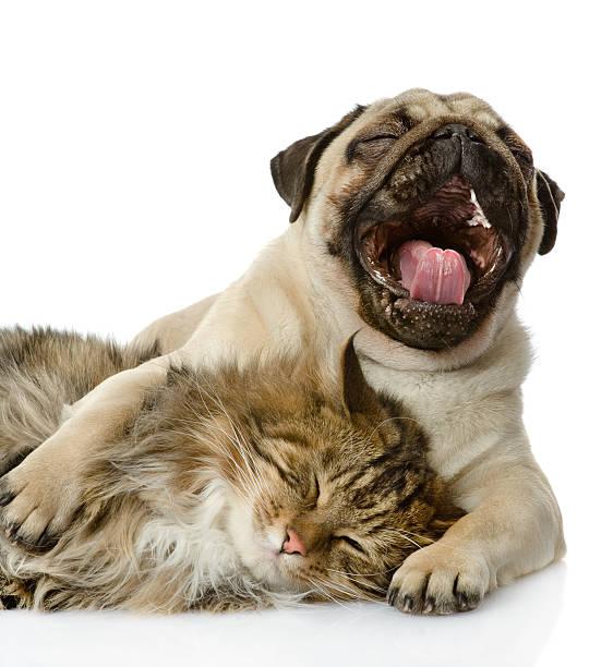 The dog and cat lie together picture id160705282?b=1&k=6&m=160705282&s=612x612&w=0&h=ykhbb4d0pnotolaqgilar3lruob02slksvi5rw2n3ua=
