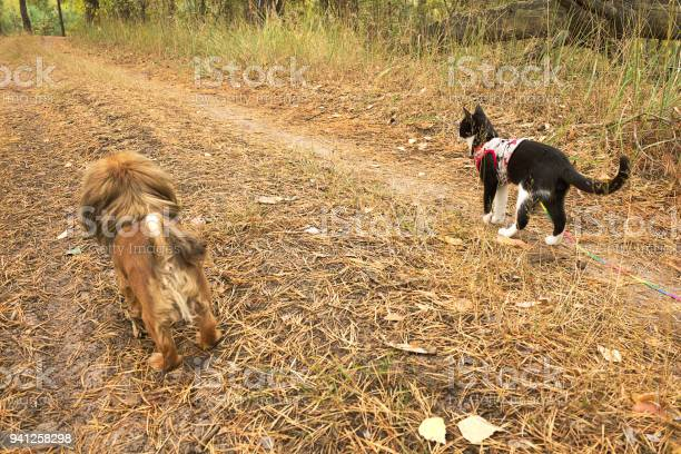 The dog and the cat are running one by one the forest road picture id941258298?b=1&k=6&m=941258298&s=612x612&h=trxxb2vutg6dmy6m6eqp6mzrxh7f37qteo7bvzbckzo=
