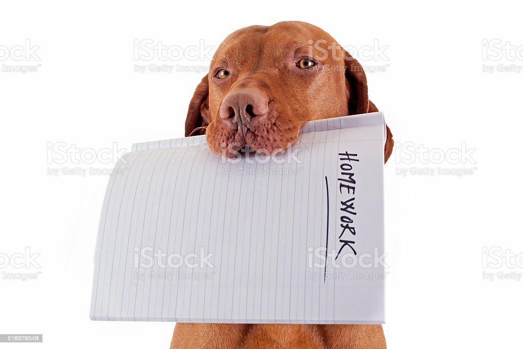 the dog ate my homework stock photo