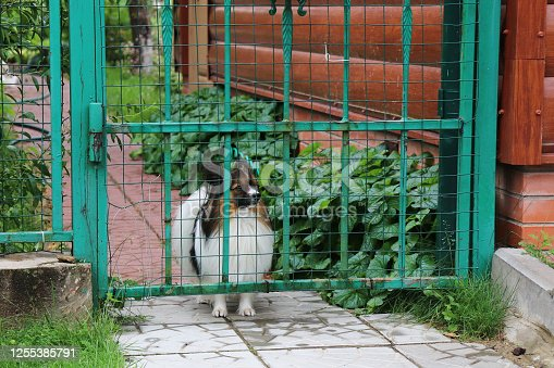 the dog behind the gate in the garden
