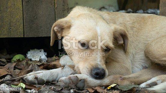 The dog bites his leg because of fleas.