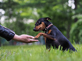 足男を犬に与えます。ペットとオーナー、忠誠心と献身の友情の概念。自然、緑の草