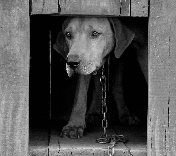 O cão na cadeia - foto de acervo