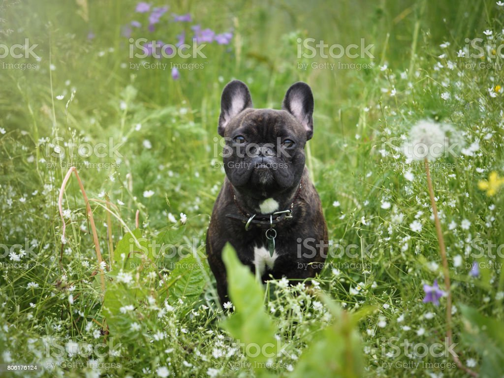 The dog in the tall grass among the flowers. stock photo