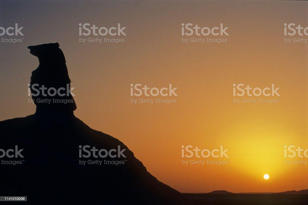 der hund in die weisse wüste – Foto