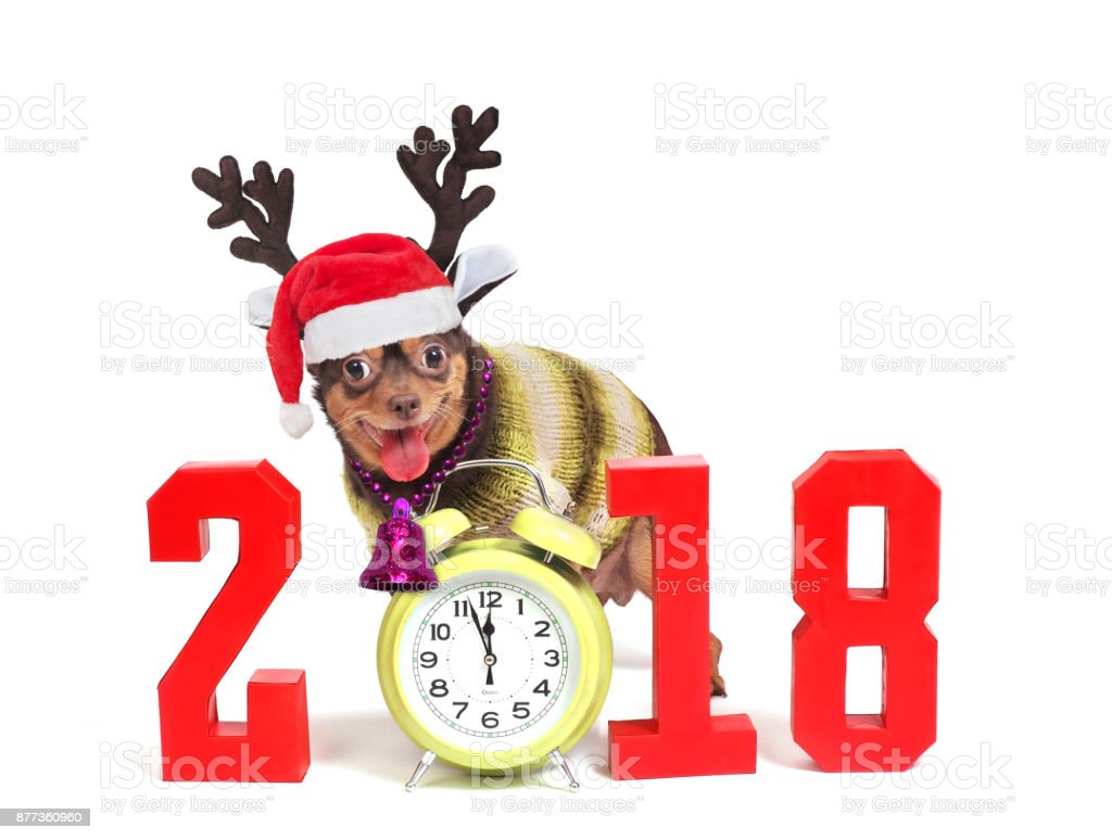 the dog is a symbol of 2018 year and numbers stock photo