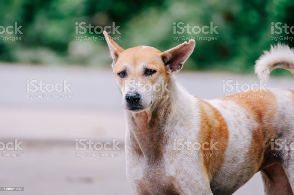 Der Hund sucht etwas - Lizenzfrei Atelier Stock-Foto