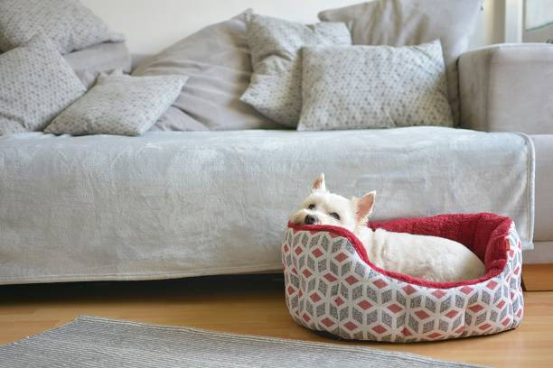 der hund liegt in seinem hundebett - katzen kissen stock-fotos und bilder