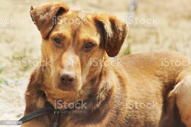 The dog lies on the street dog looking at camera picture id1169204950?b=1&k=6&m=1169204950&s=612x612&h=aavmwrqpk9zoz9nej9qnmj0hvasziachsdphqvm0pms=