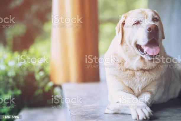 The dog looking sad waiting in front of the house straight looking picture id1136188801?b=1&k=6&m=1136188801&s=612x612&h=mc8vxdaxfca1cn5dejglz6itin4siitlkcyyrbt 7fs=