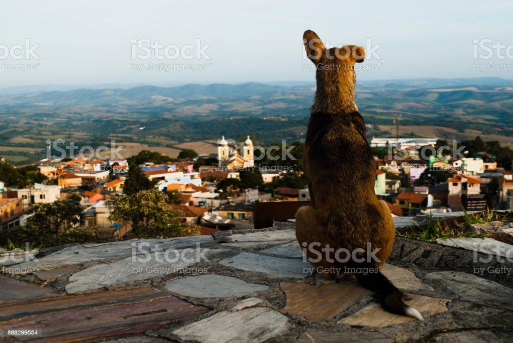 O cão Olha para a pequena cidade no Brasil - foto de acervo