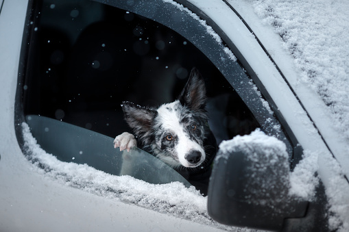 Small dog looking out car window in winter snow outside.
