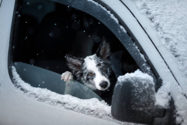 The dog looks out of the car window snow picture id958407626?b=1&k=6&m=958407626&s=612x612&w=0&h=vydajrzizf3kfux ayn6pxliva xsie4t1k0phph ts=