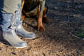 The dog obediently sits at Women's feet in rubber boots. An adult rottweiler carries out the owner's commands at the training site. Training dogs. Ground level shooting. Selective focus.