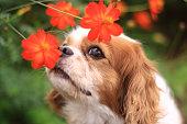犬の笑顔と花