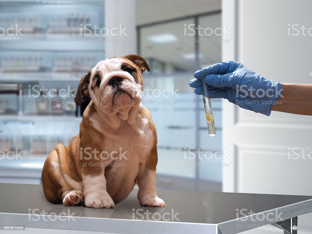 The dog on the Desk stock photo