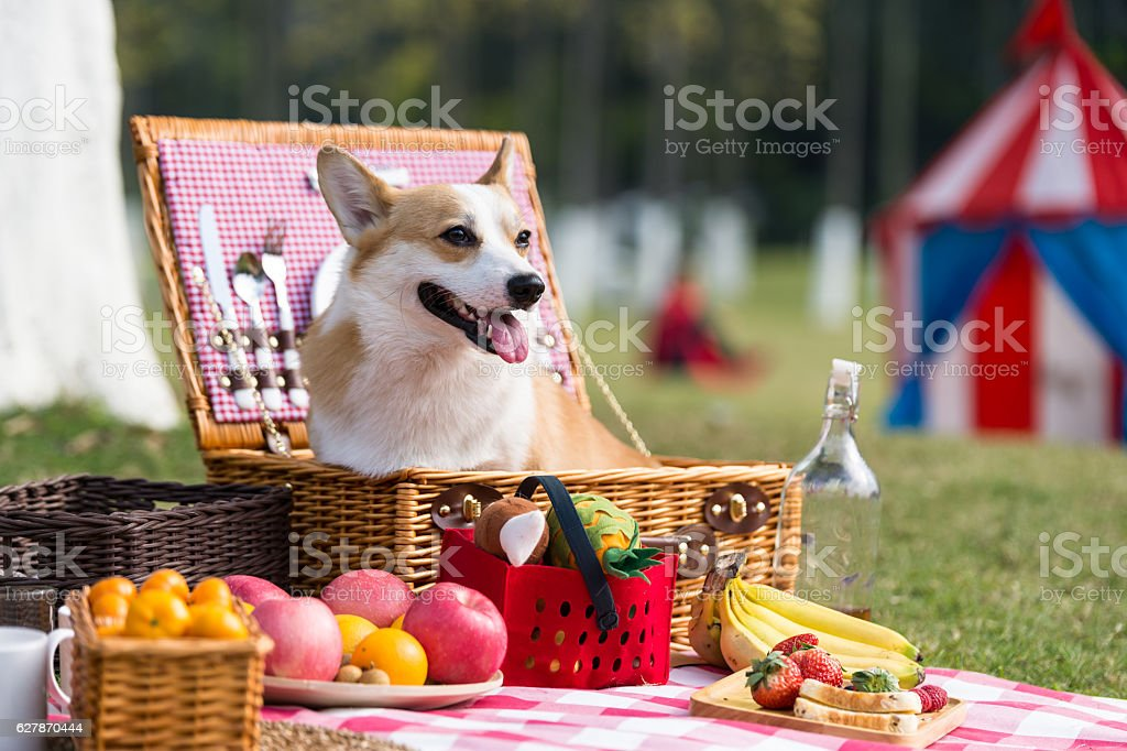 The dog on the grass for a picnic - foto de acervo