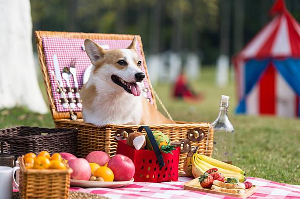 The dog on the grass for a picnic - foto de acervo