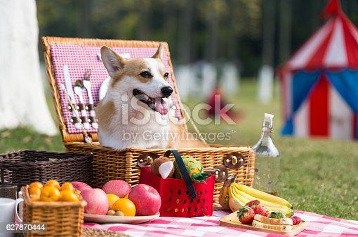 Foto de The Dog On The Grass For A Picnic e mais banco de imagens de Alegria