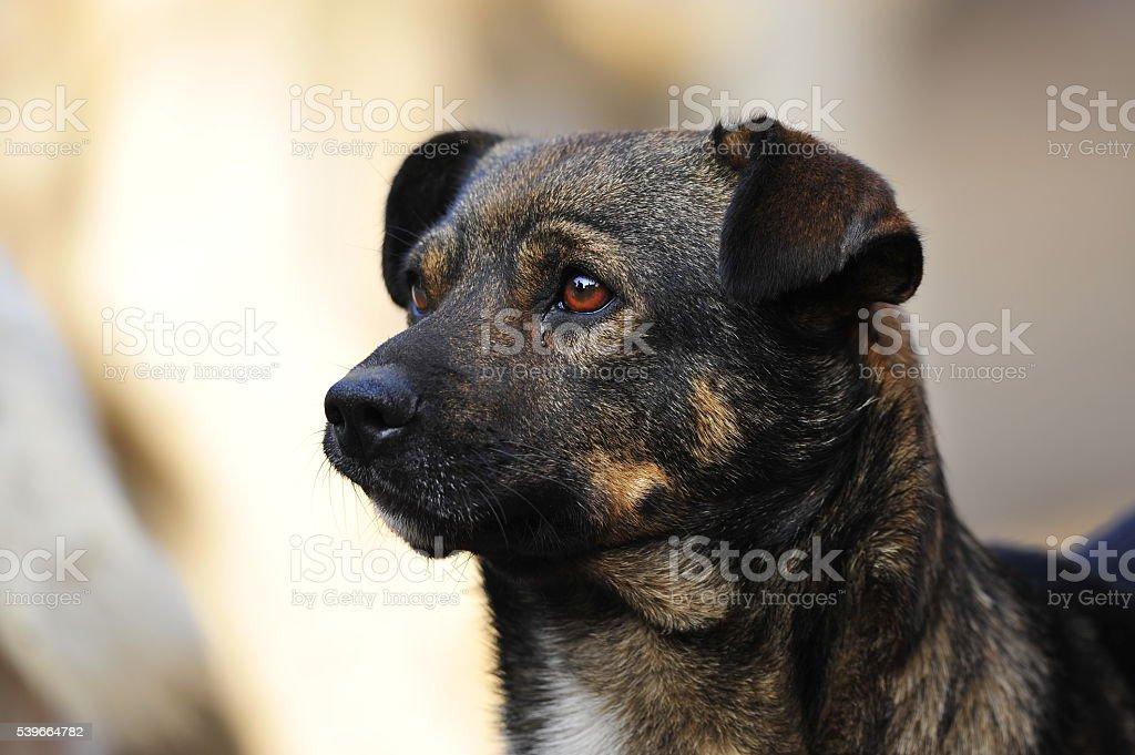 The dog stock photo