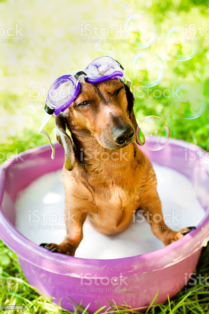 The dog takes a summer bath stock photo