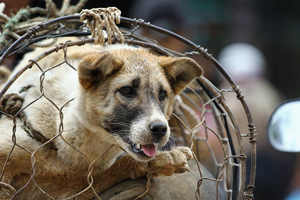 The dog trade in Vietnam market stock photo