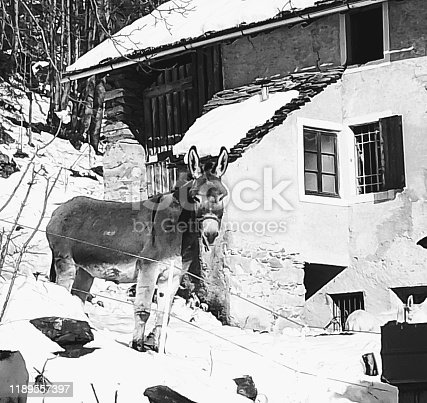evocative image in black and white starring a donkey in the background an old house