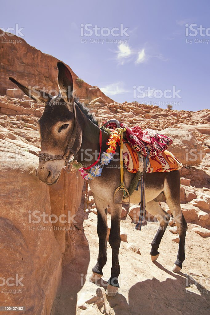The donkey. royalty-free stock photo