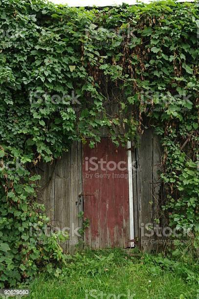 The Door Stock Photo - Download Image Now