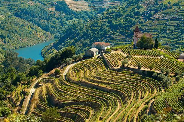 3,423 Douro Valley Stock Photos, Pictures & Royalty-Free Images - iStock