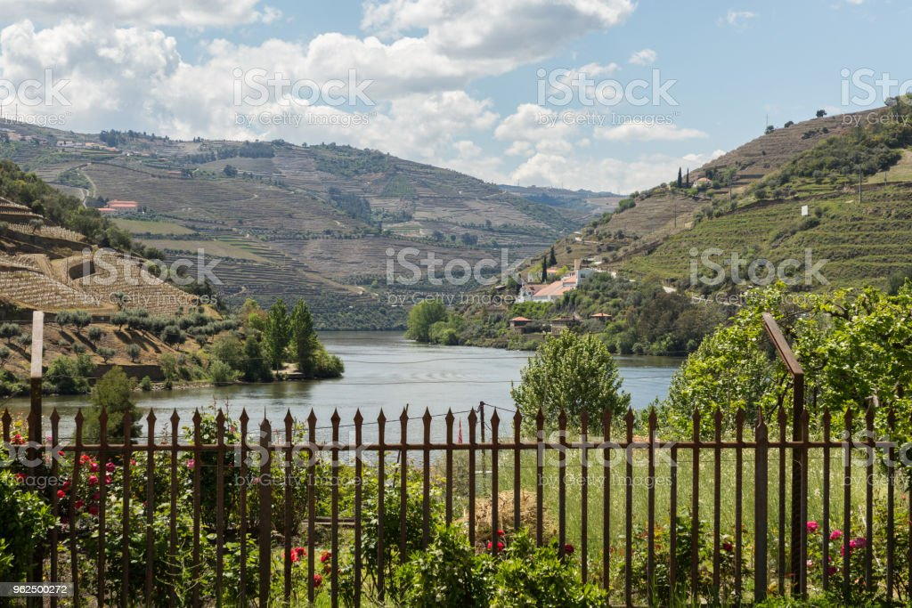 the Douro River Valley - Royalty-free Agriculture Stock Photo