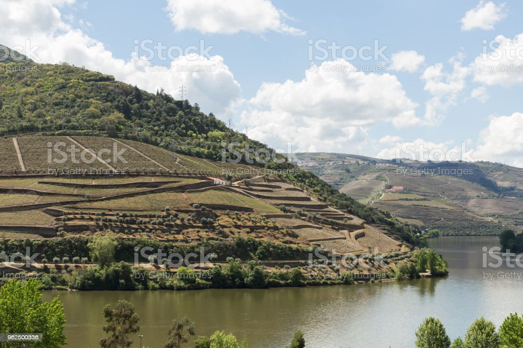 o vale do Rio Douro - Foto de stock de Agricultura royalty-free