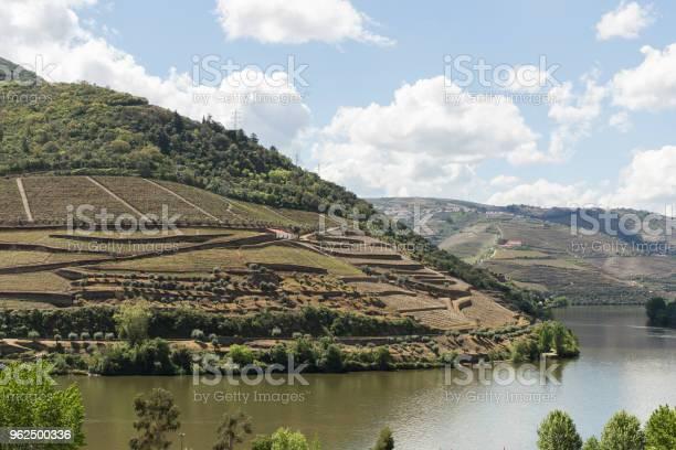 Foto de O Vale Do Rio Douro e mais fotos de stock de Agricultura