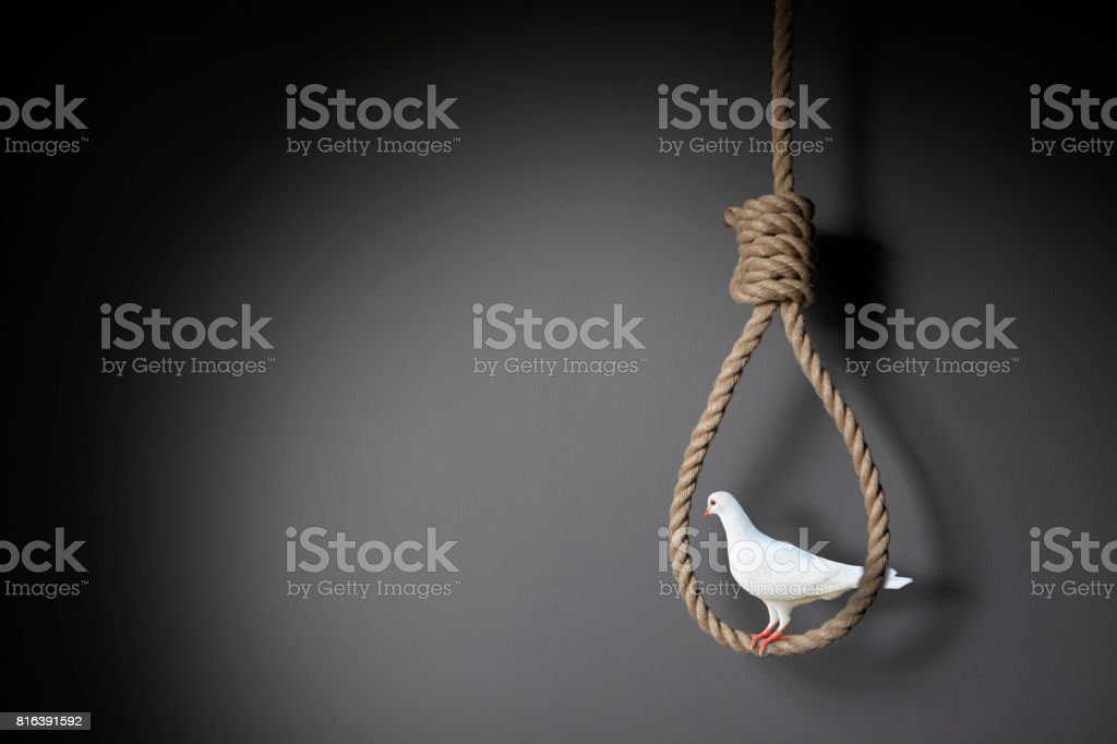 The dove on the noose stock photo