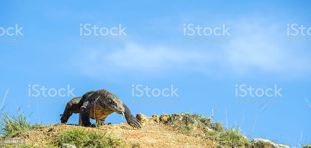 The dragon comes on the blue sky background. stock photo