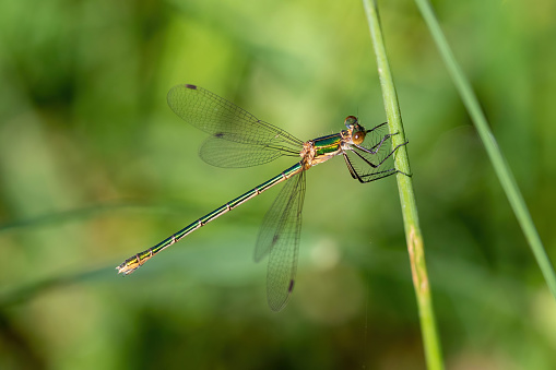 The dragonfly near the water at summer morning light. High quality photo