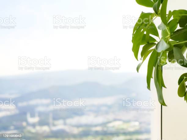 Photo of The dreamy urban background seen behind the flower pots