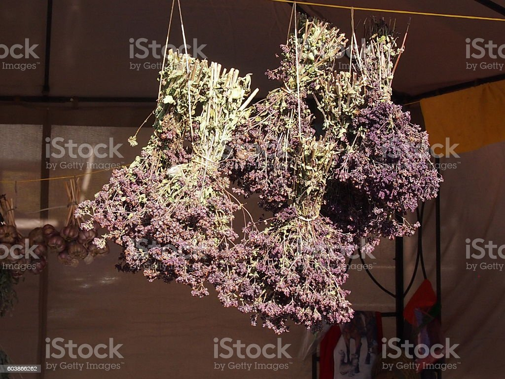 The dried flowers of a marjoram stock photo