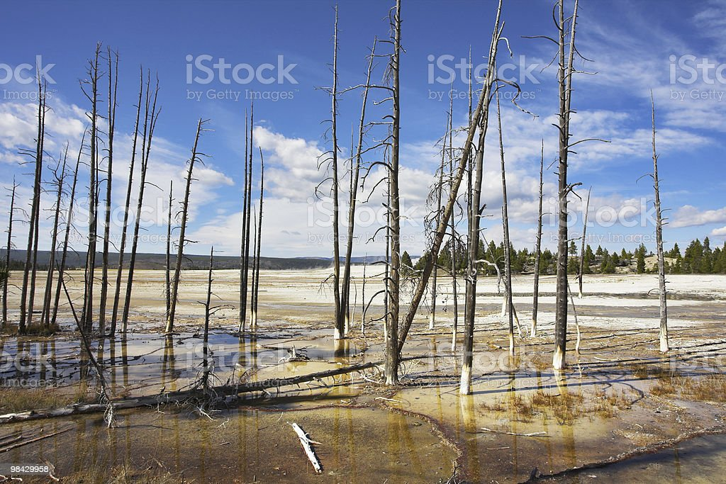 The dried up trunks of trees royalty-free stock photo