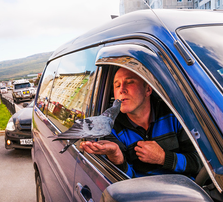 The driver of a car feeds a wild pigeon from his lips with sunflower seeds. All this takes place on the roadside in the city of Magadan (Eastern Siberia), and it looks from the side of everyday life. All this lasts for several minutes, but passers-by do n