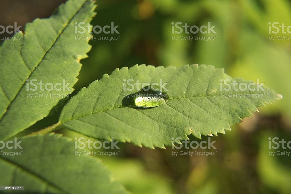 The Droplet royalty-free stock photo