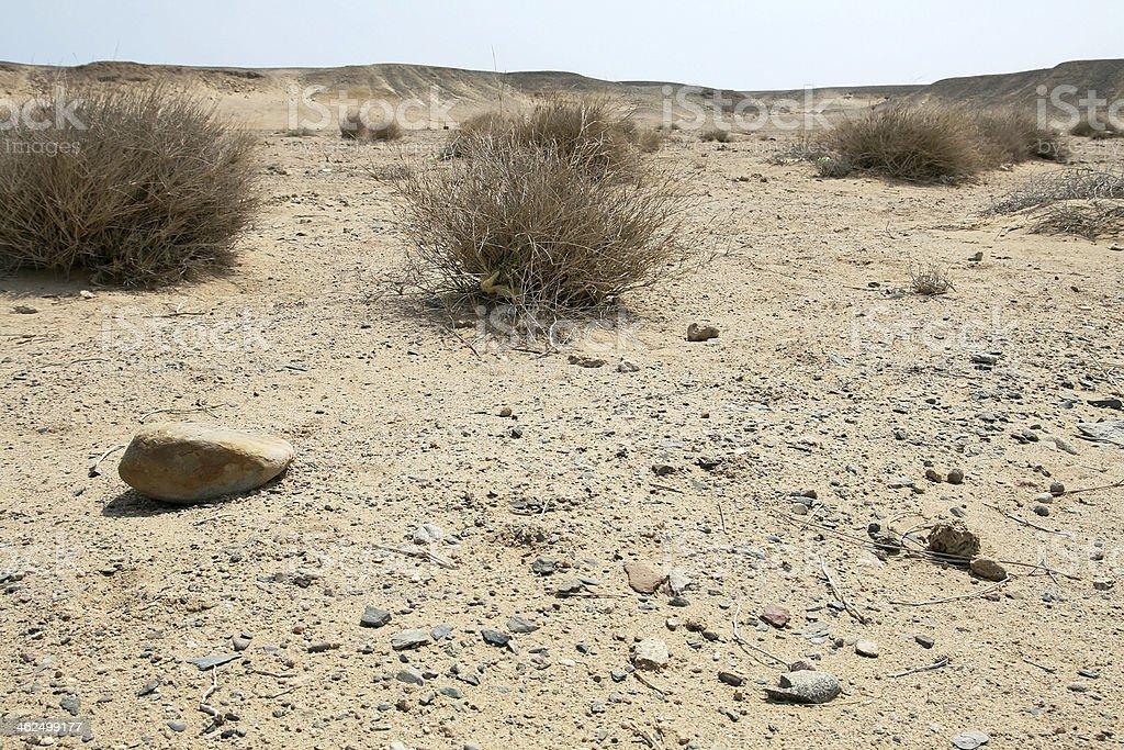 The dry desert stock photo