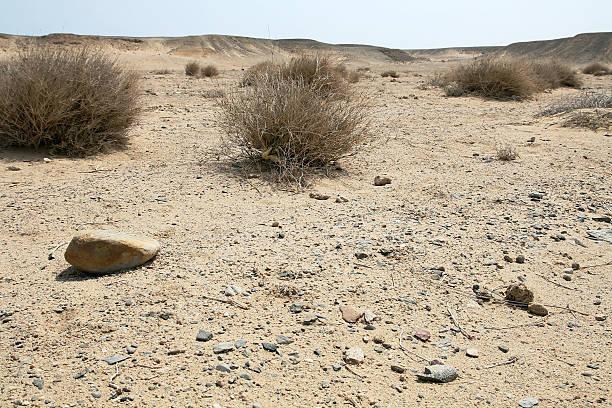The dry desert foto